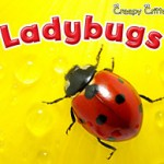 ladybugs-cover