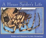 house-spider's-life